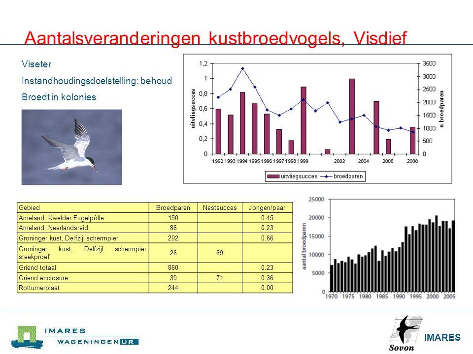 Aantalsveranderingen kustbroedvogels, Visdief