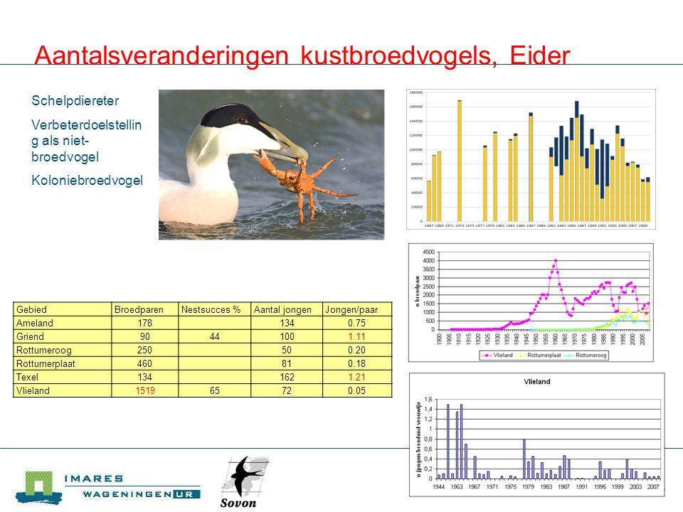 Aantalsveranderingen kustbroedvogels, Eider
