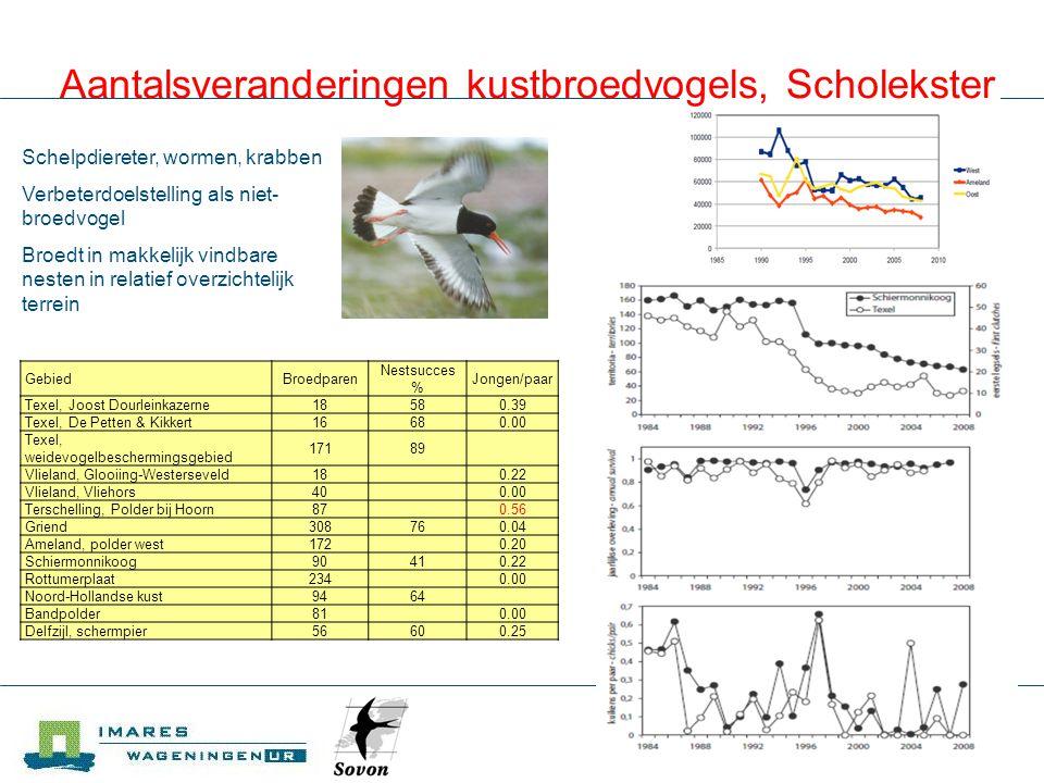 Aantalsveranderingen kustbroedvogels, Scholekster