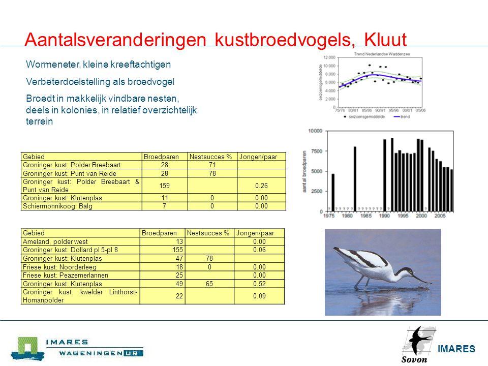 Aantalsveranderingen kustbroedvogels, Kluut