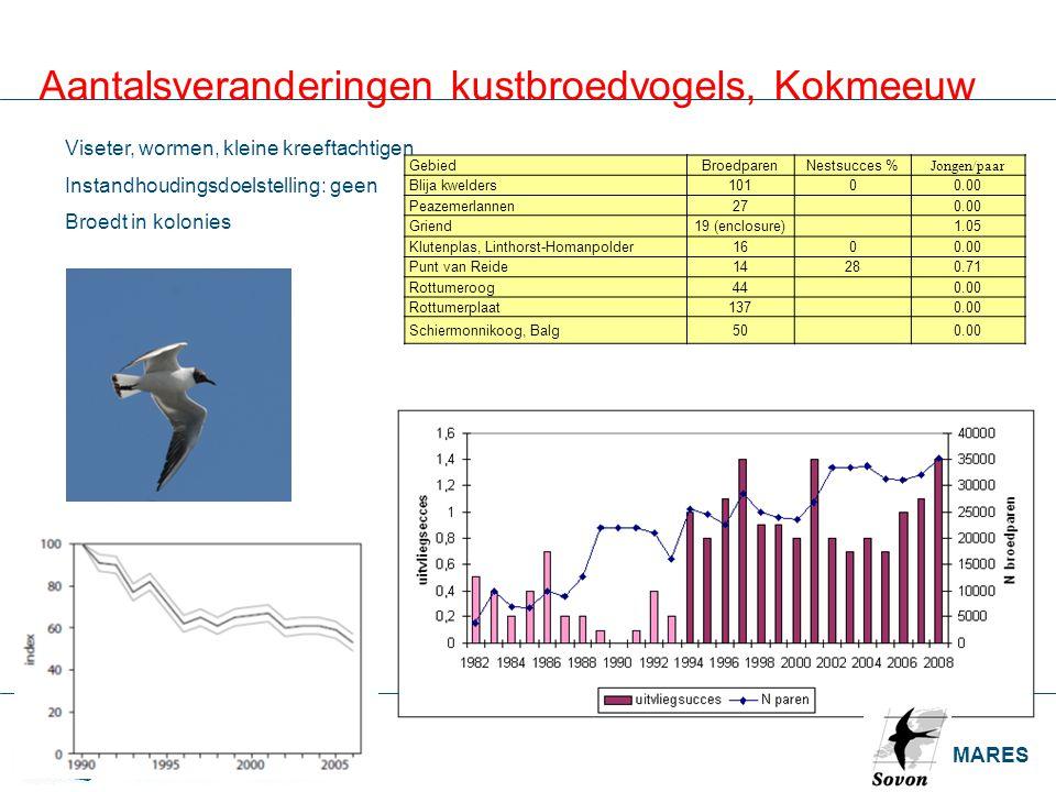 Aantalsveranderingen kustbroedvogels, Kokmeeuw
