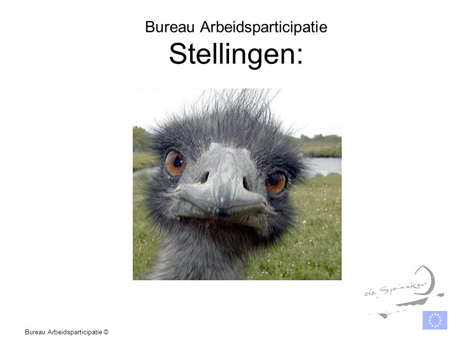 Bureau Arbeidsparticipatie Stellingen: