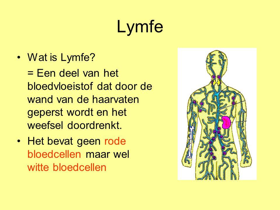 Lymfe Wat is Lymfe = Een deel van het bloedvloeistof dat door de wand van de haarvaten geperst wordt en het weefsel doordrenkt.
