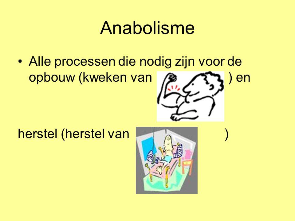 Anabolisme Alle processen die nodig zijn voor de opbouw (kweken van ) en.