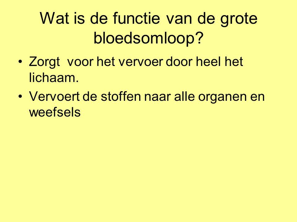 Wat is de functie van de grote bloedsomloop
