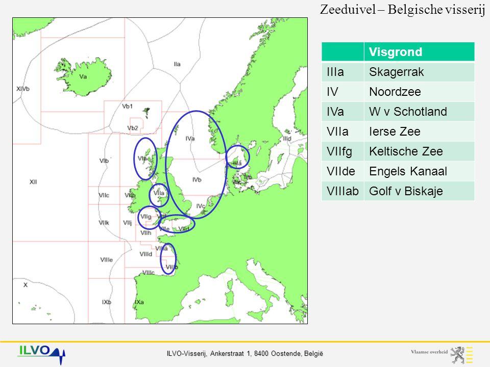 Zeeduivel – Belgische visserij