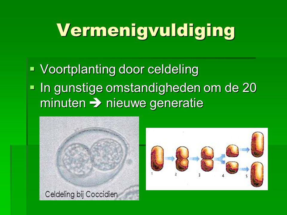 Vermenigvuldiging Voortplanting door celdeling