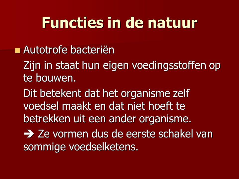 Functies in de natuur Autotrofe bacteriën