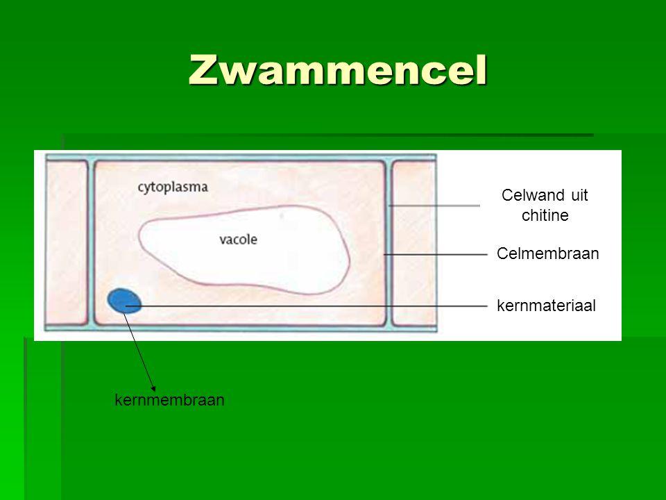 Zwammencel Celwand uit chitine Celmembraan kernmateriaal kernmembraan