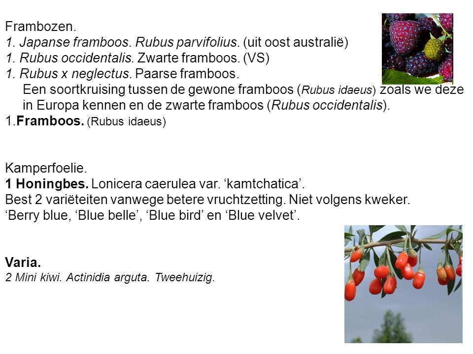 1. Japanse framboos. Rubus parvifolius. (uit oost australië)