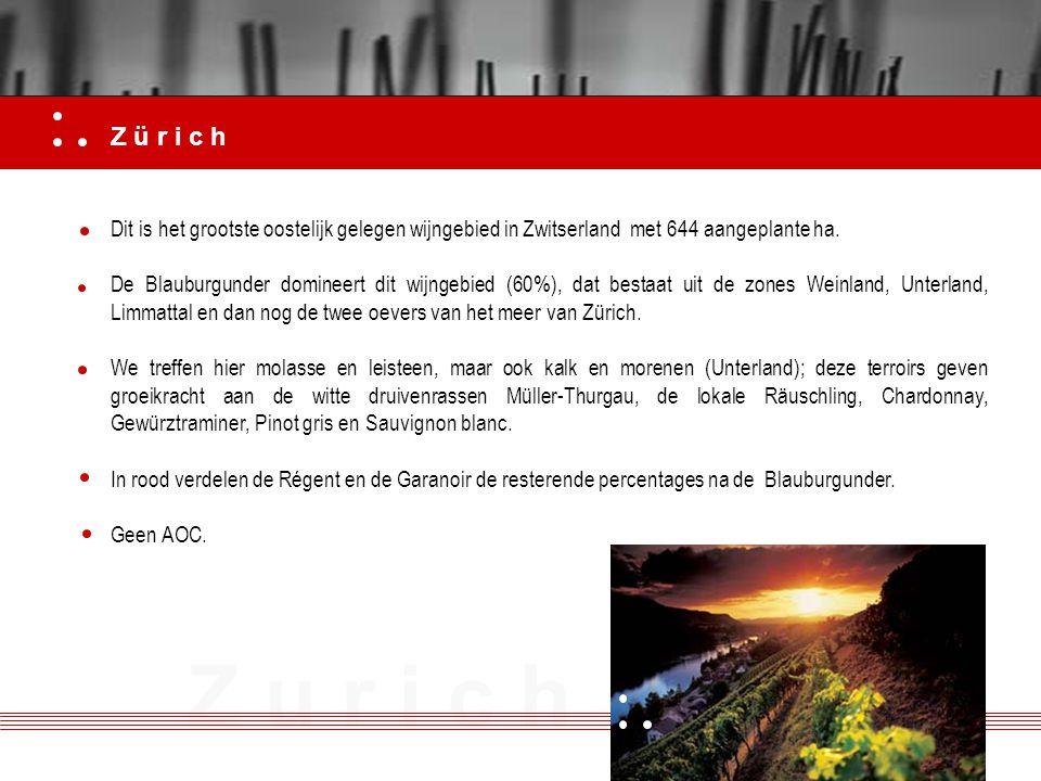 Z ü r i c h Dit is het grootste oostelijk gelegen wijngebied in Zwitserland met 644 aangeplante ha.