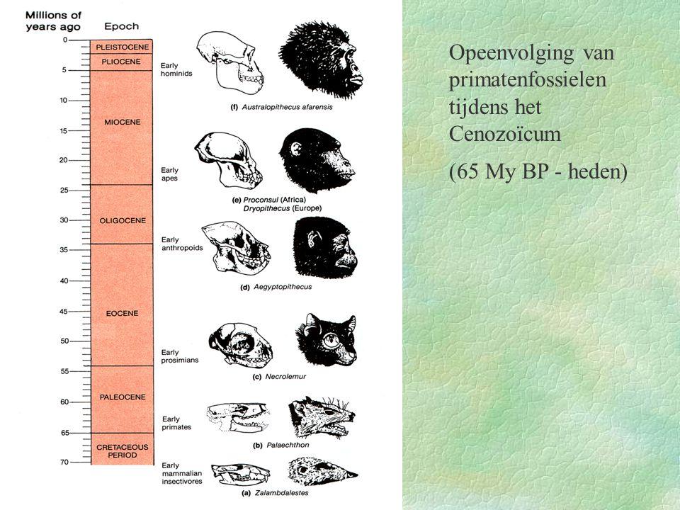 Opeenvolging van primatenfossielen tijdens het Cenozoïcum