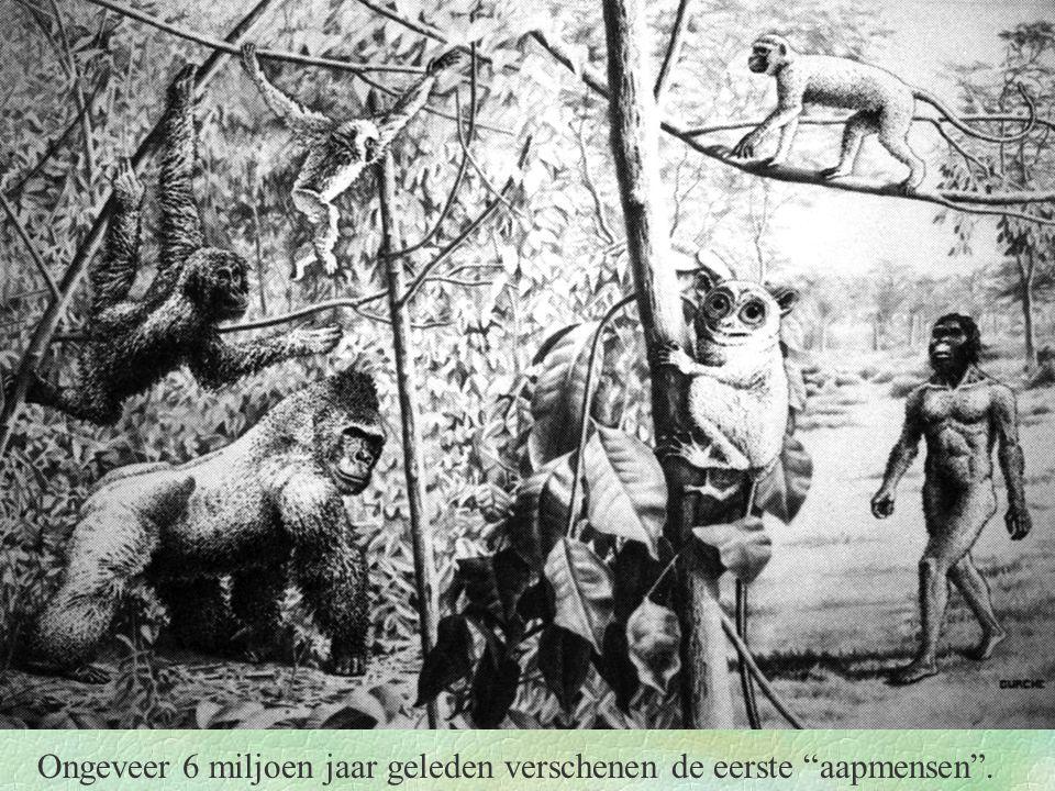 Ongeveer 6 miljoen jaar geleden verschenen de eerste aapmensen .