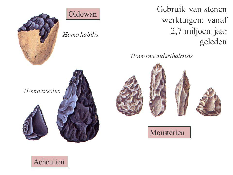 Gebruik van stenen werktuigen: vanaf 2,7 miljoen jaar geleden