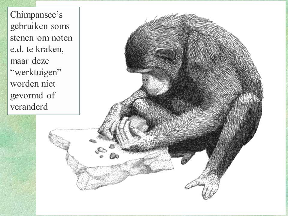 Chimpansee's gebruiken soms stenen om noten e. d