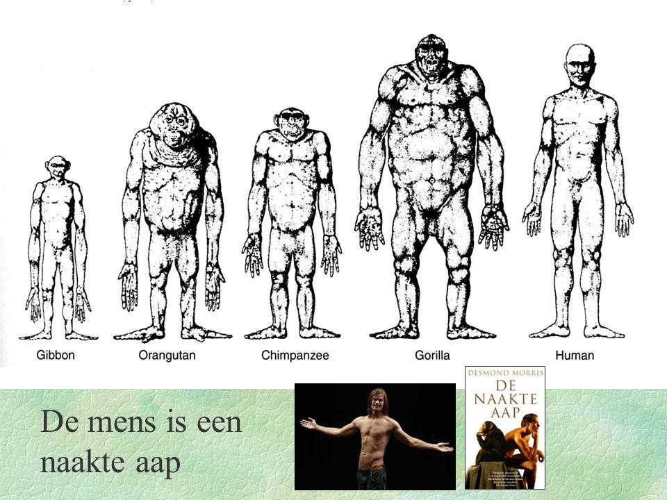 De mens is een naakte aap