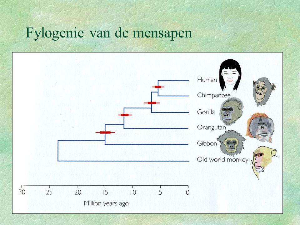 Fylogenie van de mensapen