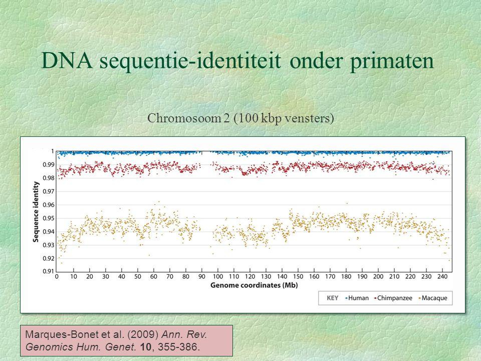 DNA sequentie-identiteit onder primaten