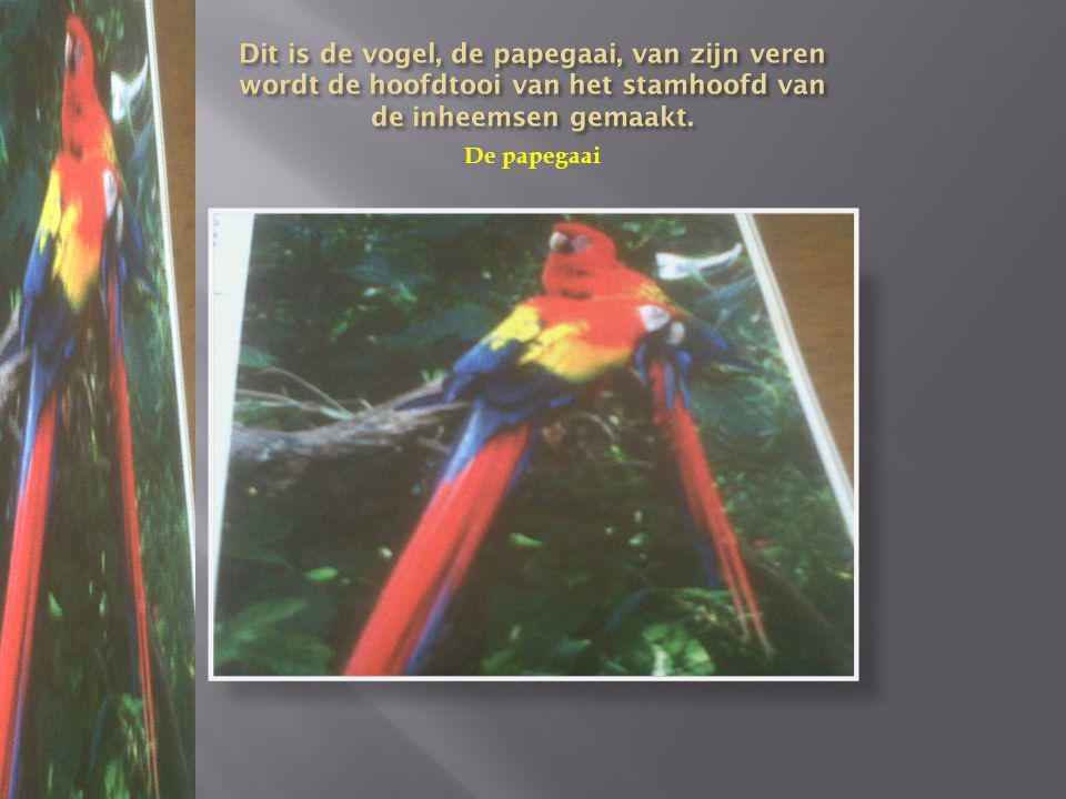 Dit is de vogel, de papegaai, van zijn veren wordt de hoofdtooi van het stamhoofd van de inheemsen gemaakt.