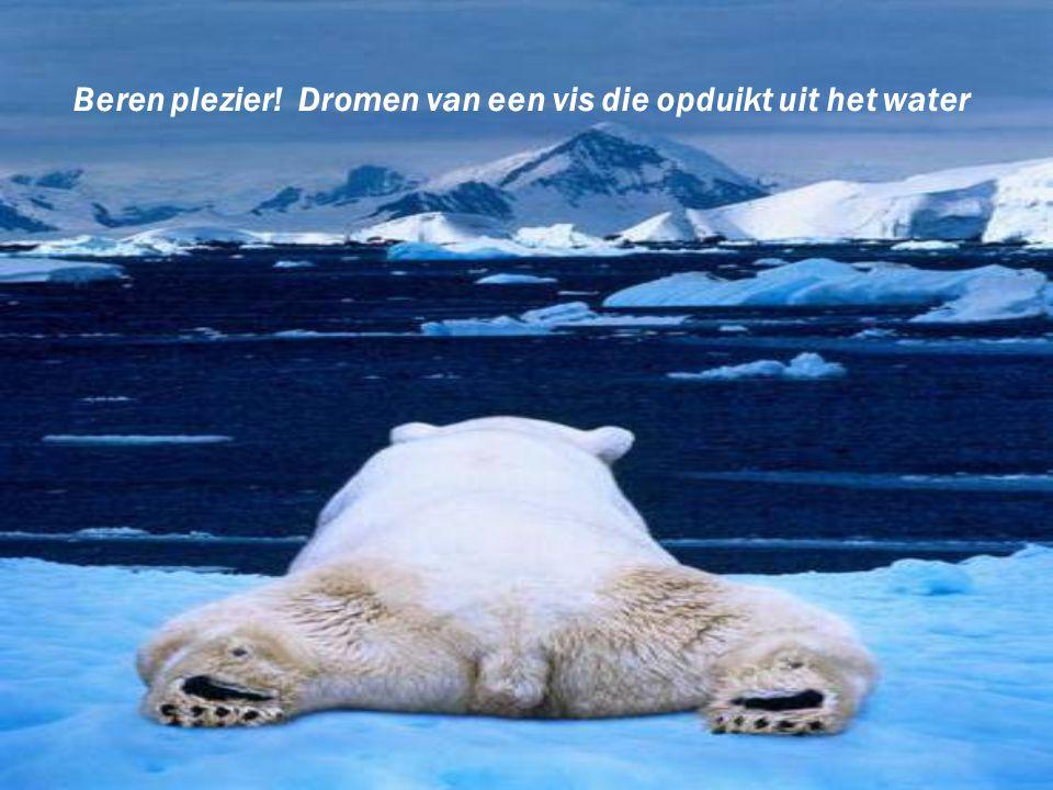 Beren plezier! Dromen van een vis die opduikt uit het water