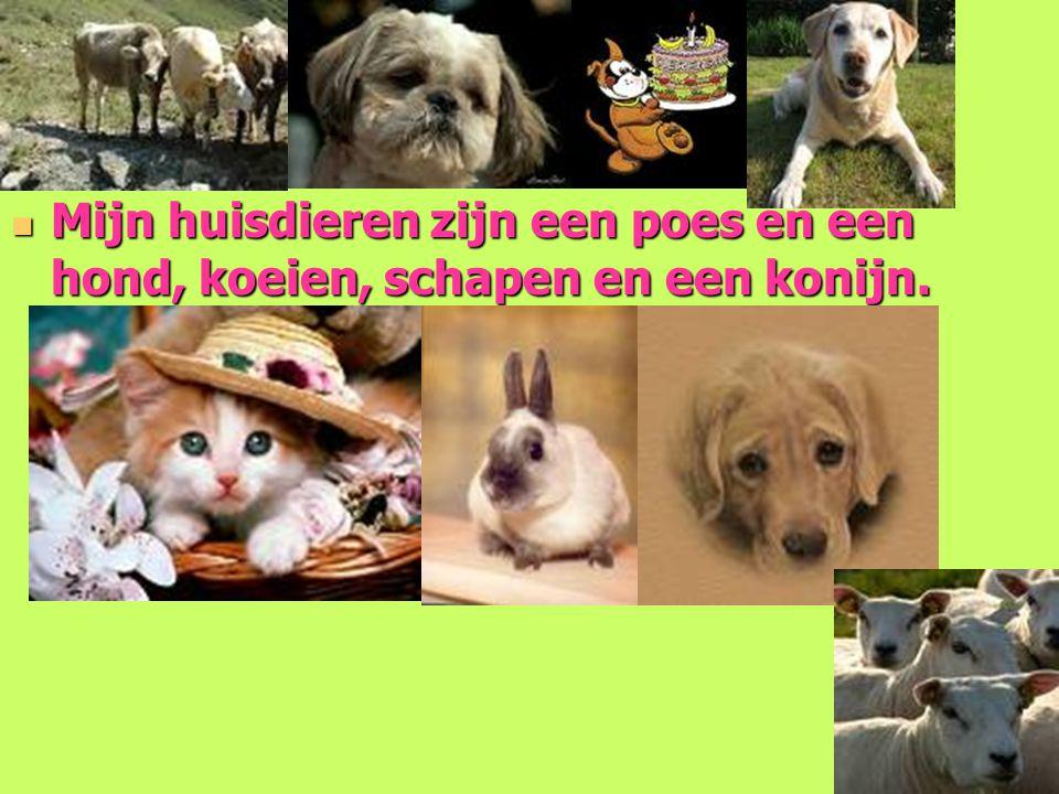 Mijn huisdieren zijn een poes en een hond, koeien, schapen en een konijn.