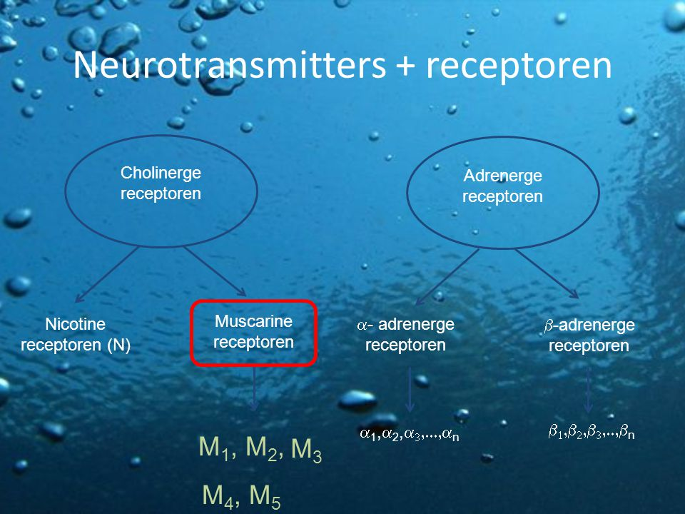 Neurotransmitters + receptoren