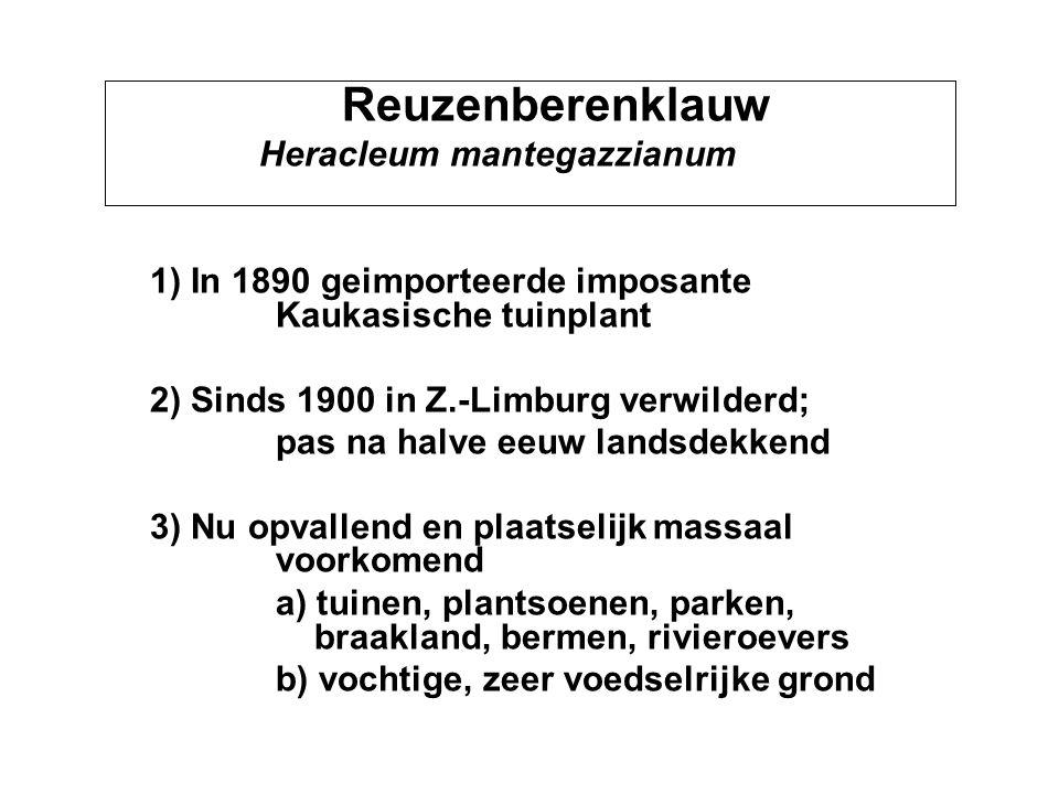 Reuzenberenklauw 2) Sinds 1900 in Z.-Limburg verwilderd;