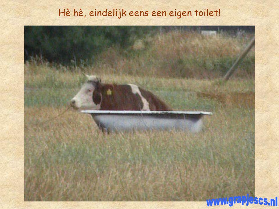 Hè hè, eindelijk eens een eigen toilet!