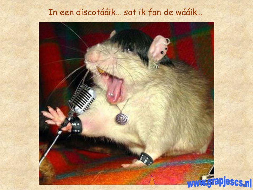 In een discotááik… sat ik fan de wááik…