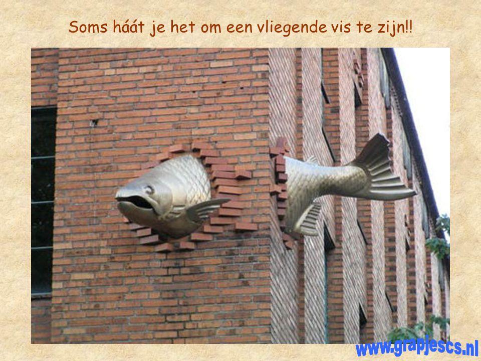 Soms háát je het om een vliegende vis te zijn!!