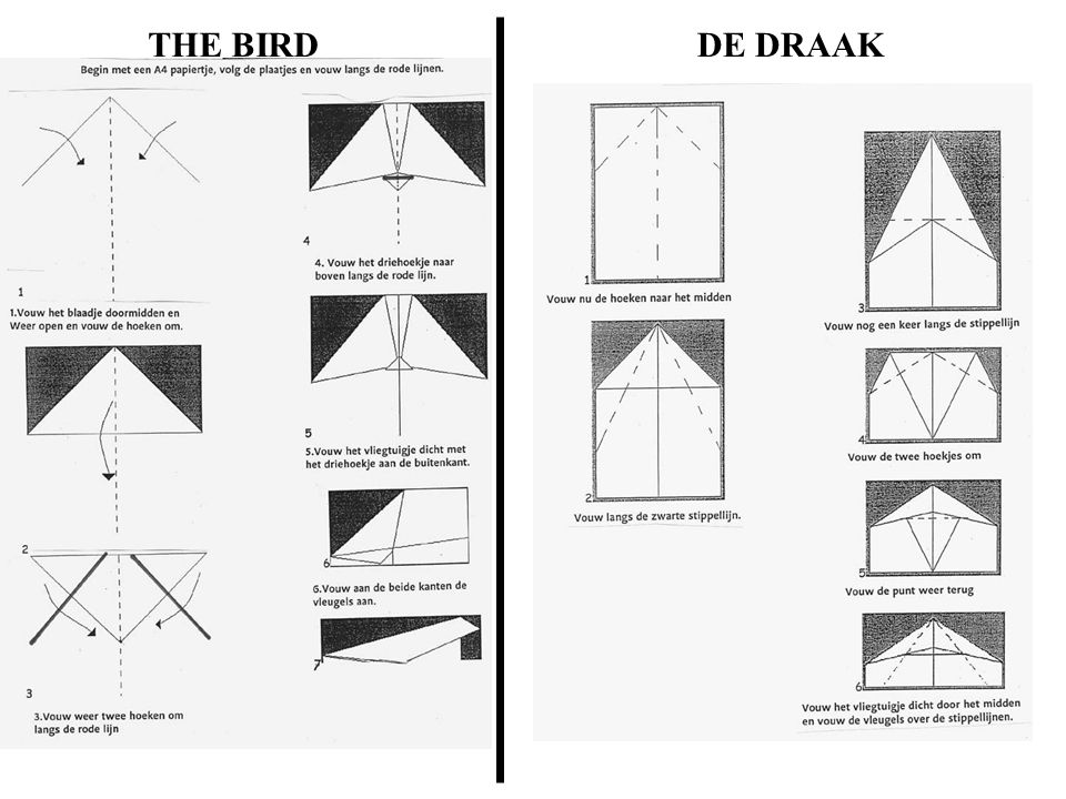 THE BIRD DE DRAAK