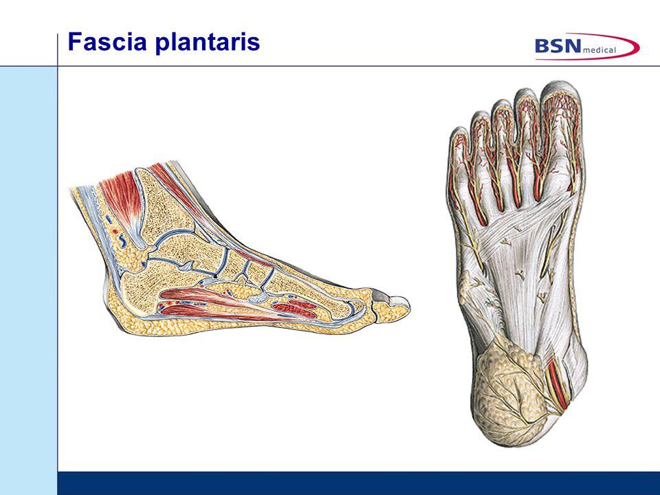 Fascia plantaris Word ook wel aponeurosis plantaris genoemd