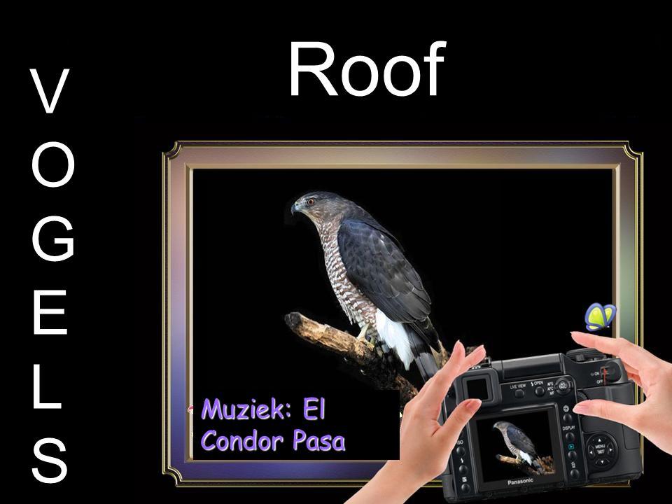 Roof V O G E L S Muziek: El Condor Pasa