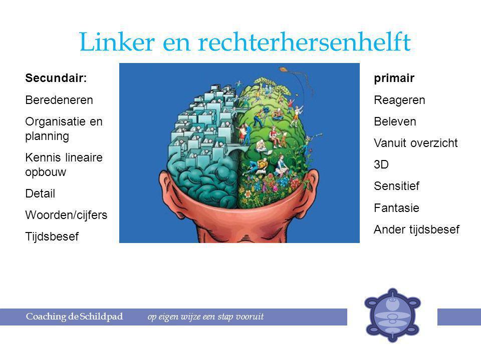 Linker en rechterhersenhelft