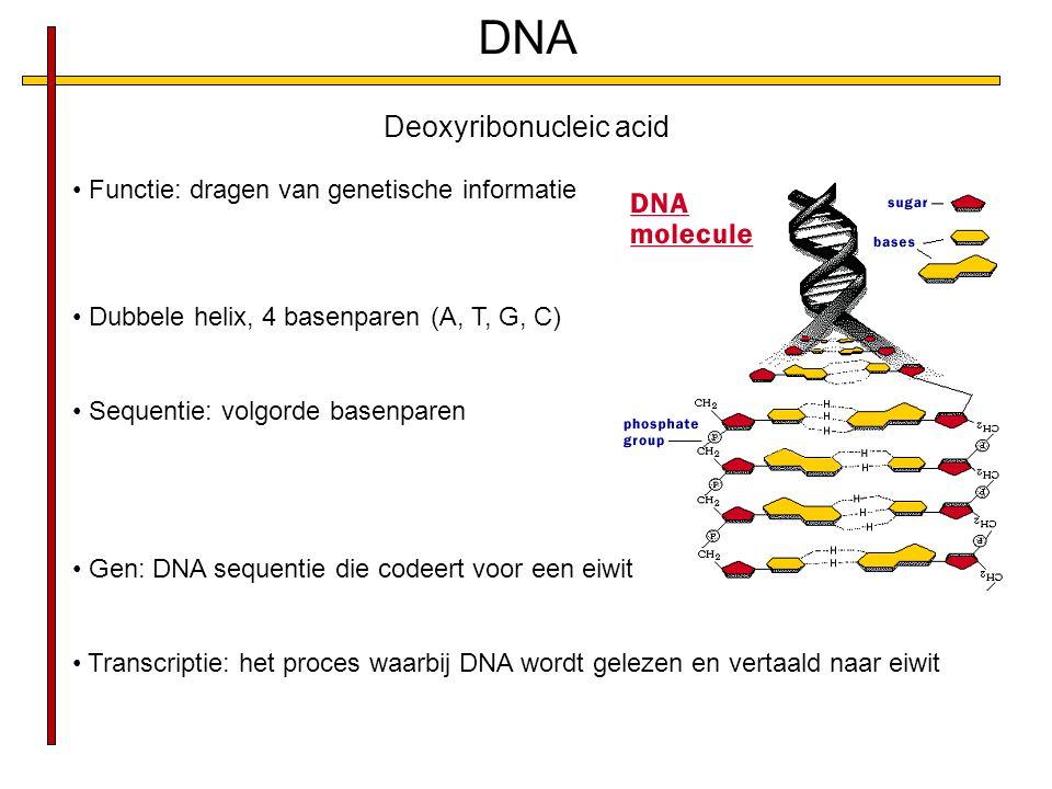 DNA Deoxyribonucleic acid Functie: dragen van genetische informatie