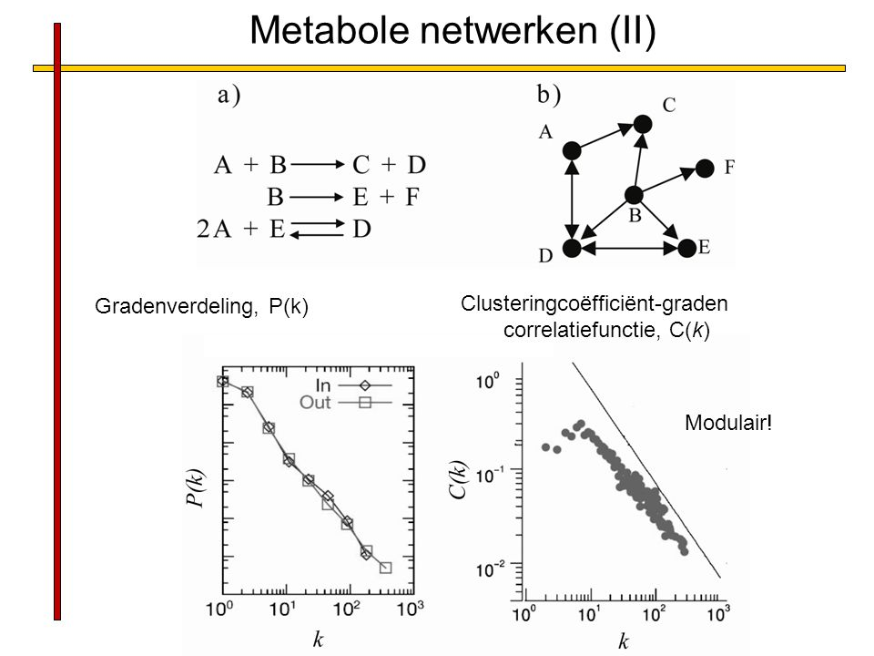 Metabole netwerken (II)