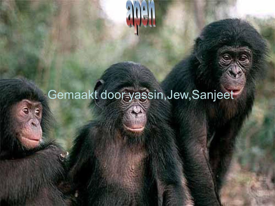 Gemaakt door yassin,Jew,Sanjeet