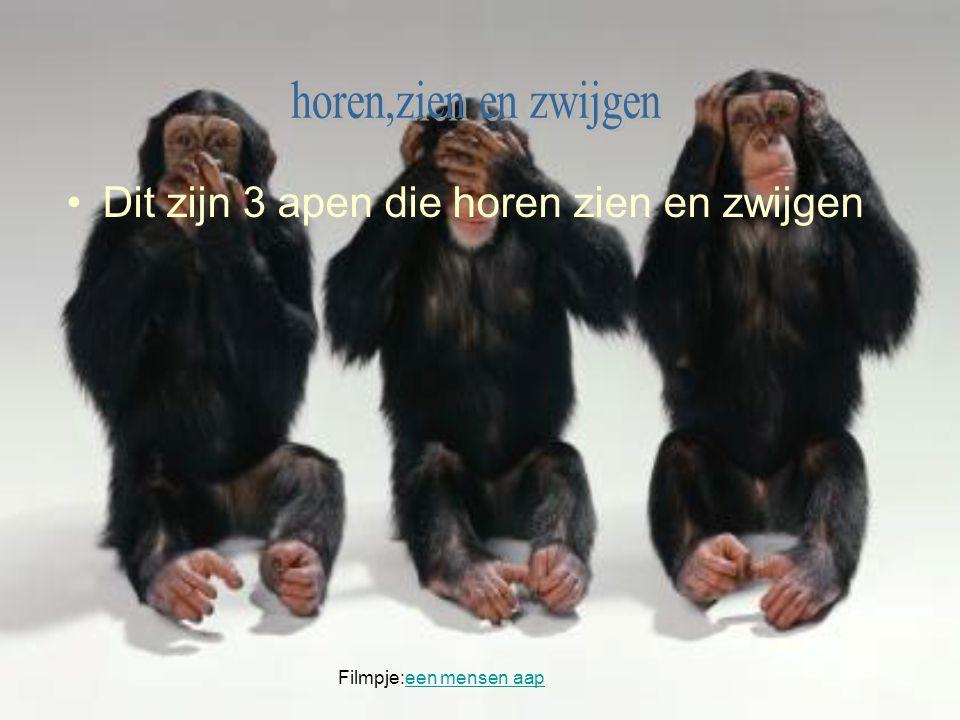 Dit zijn 3 apen die horen zien en zwijgen