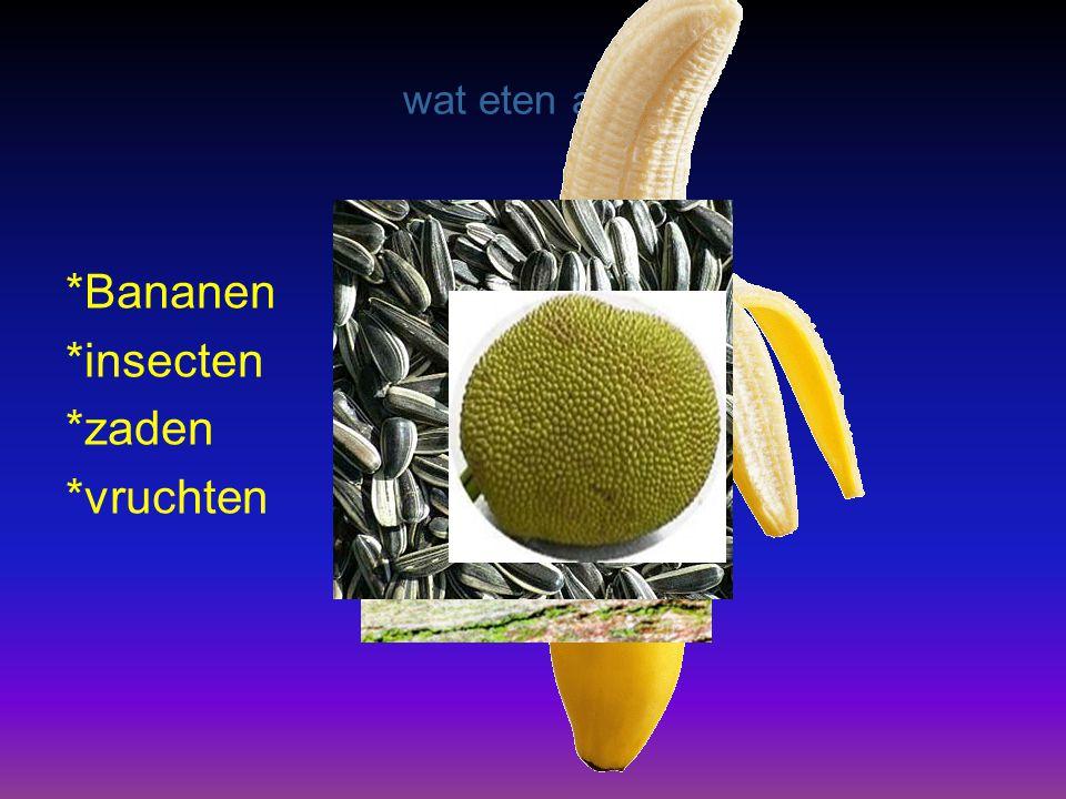 wat eten apen *Bananen *insecten *zaden *vruchten