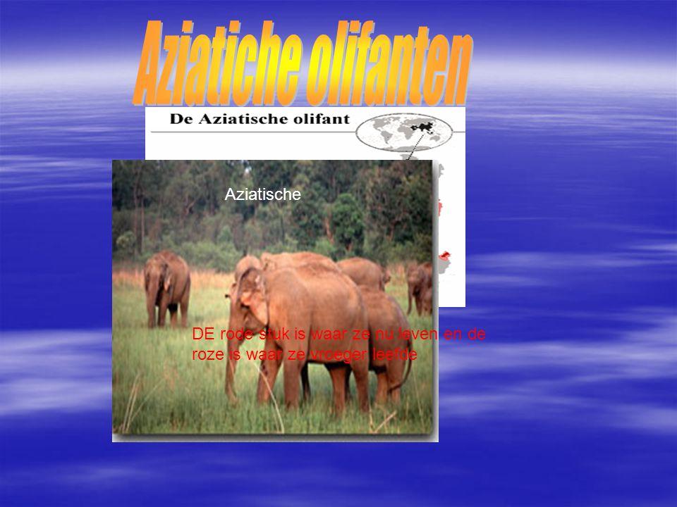Aziatiche olifanten Aziatische