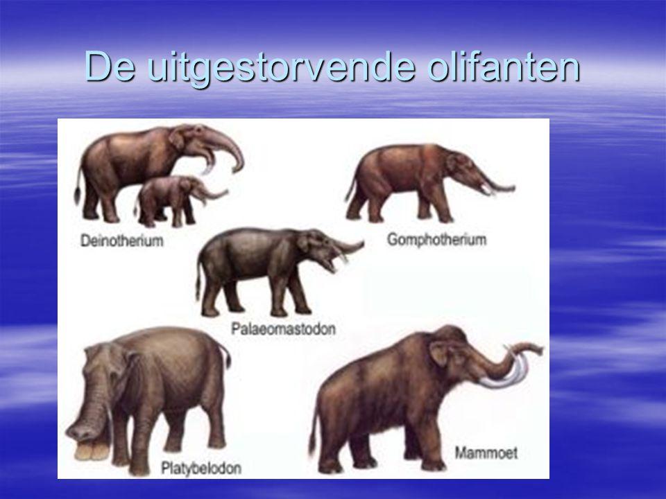 De uitgestorvende olifanten