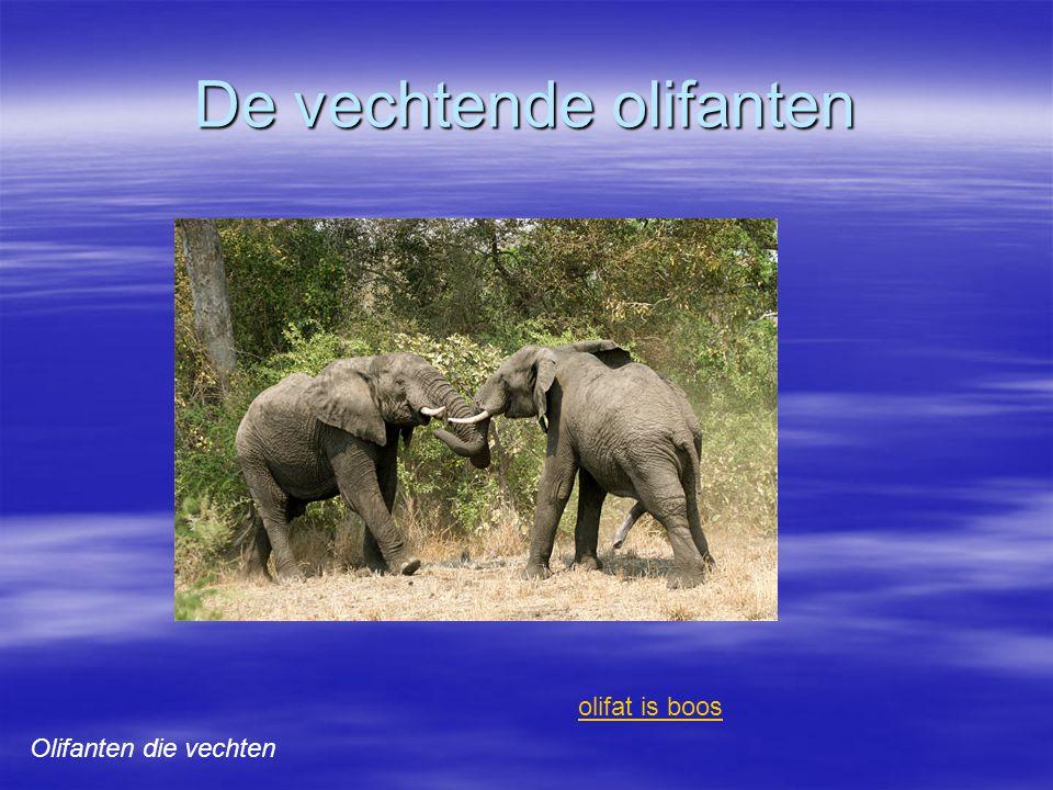 De vechtende olifanten