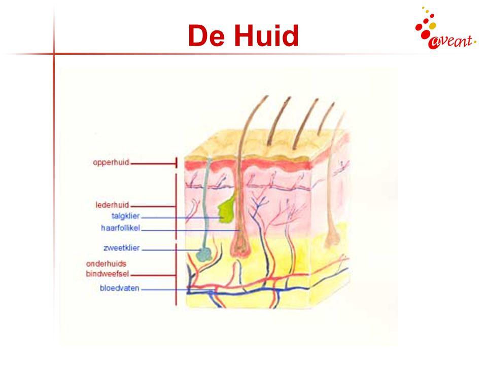 De Huid De opperhuid doet er gemiddeld 30 dagen over om zichzelf te vernieuwen. Bij de oudere huid gaat dat langzazamer.