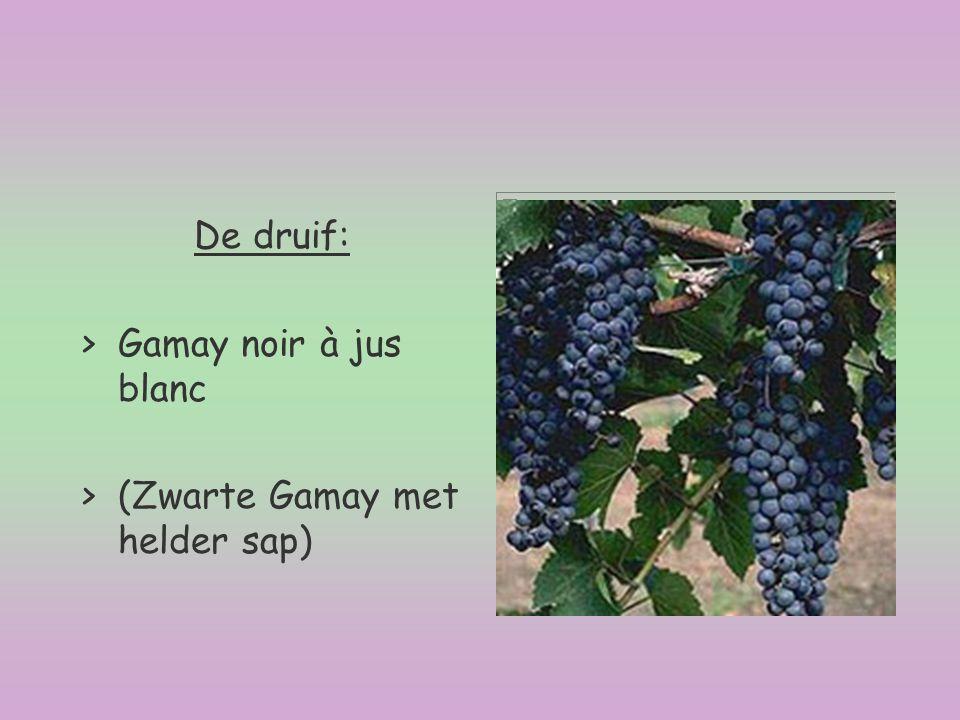 De druif: Gamay noir à jus blanc (Zwarte Gamay met helder sap)