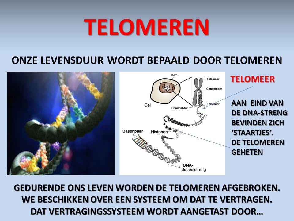 TELOMEREN ONZE LEVENSDUUR WORDT BEPAALD DOOR TELOMEREN TELOMEER