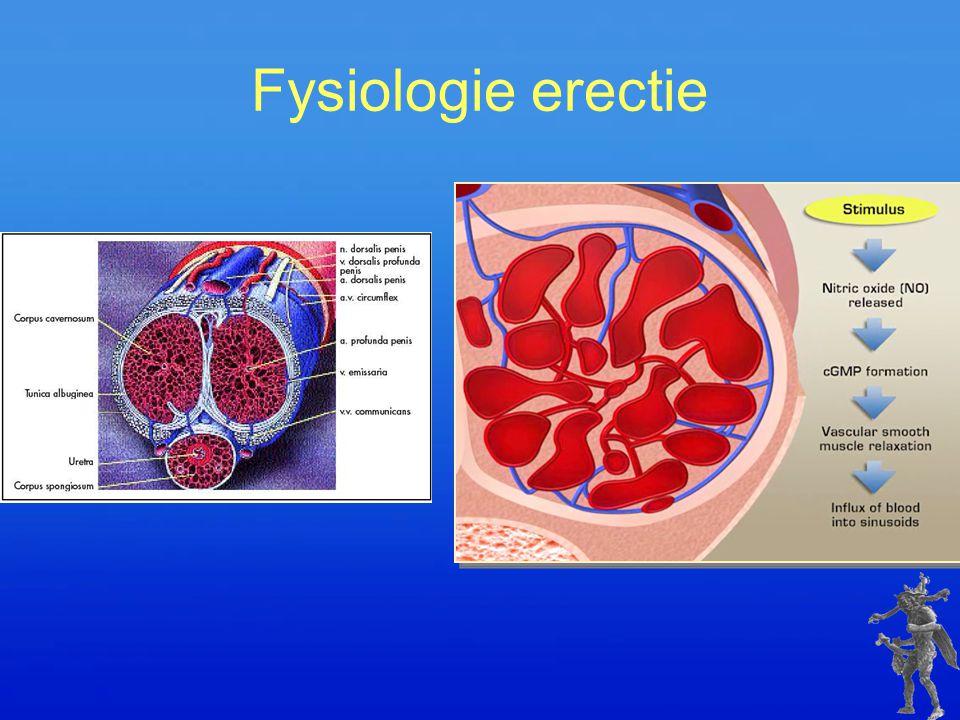 Fysiologie erectie