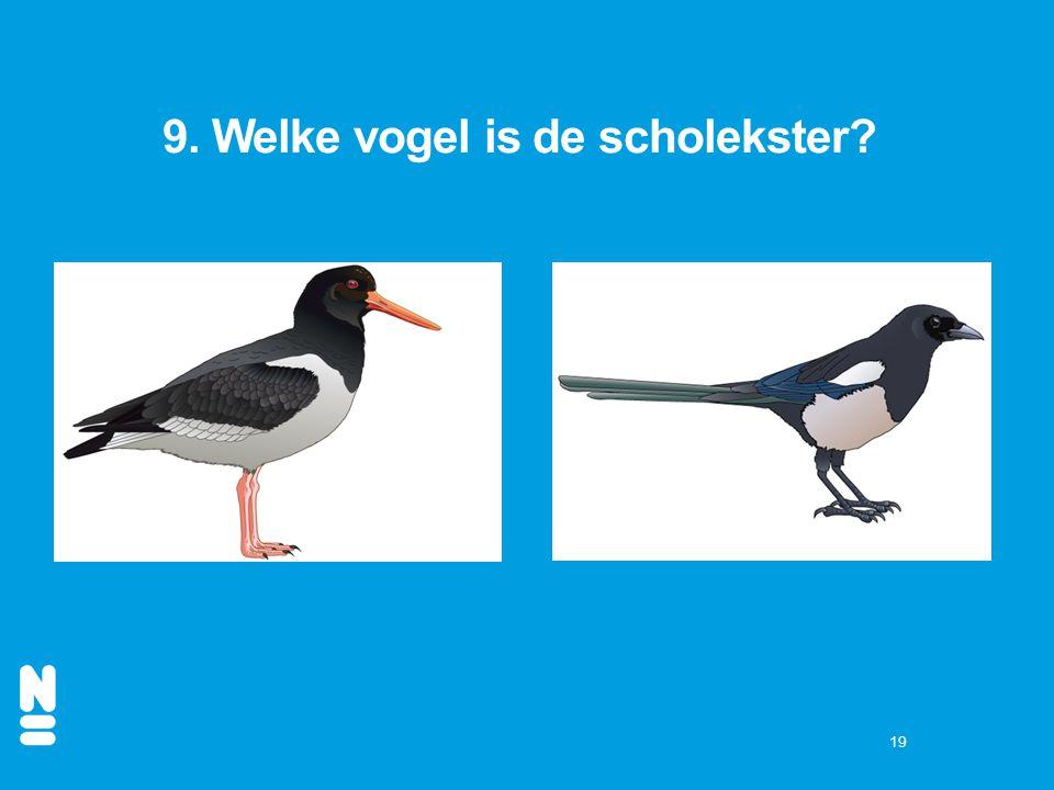 9. Welke vogel is de scholekster