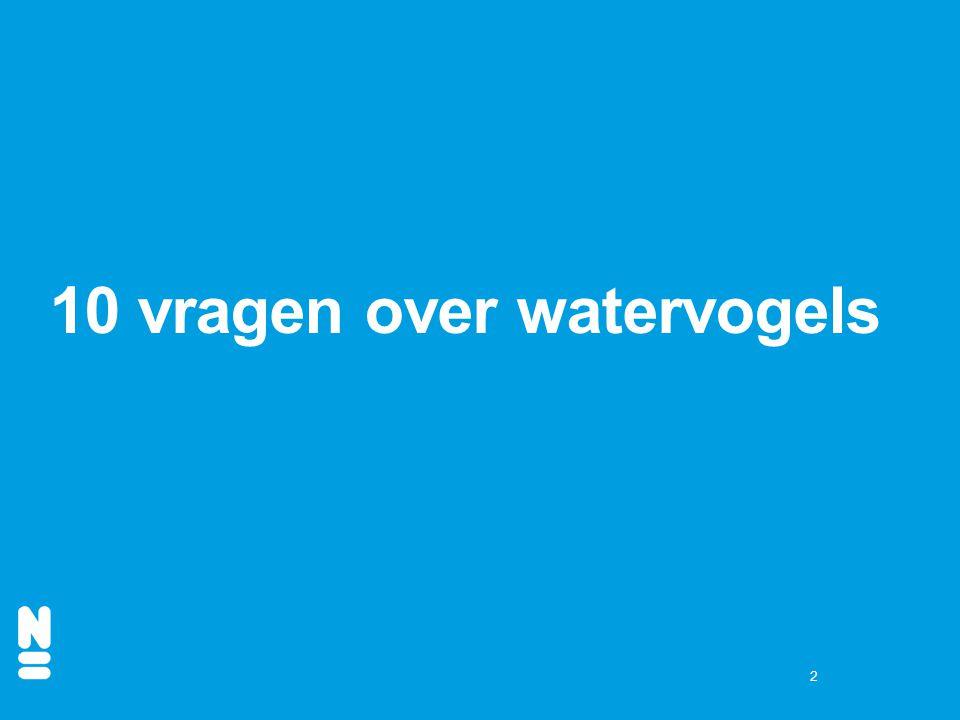 10 vragen over watervogels