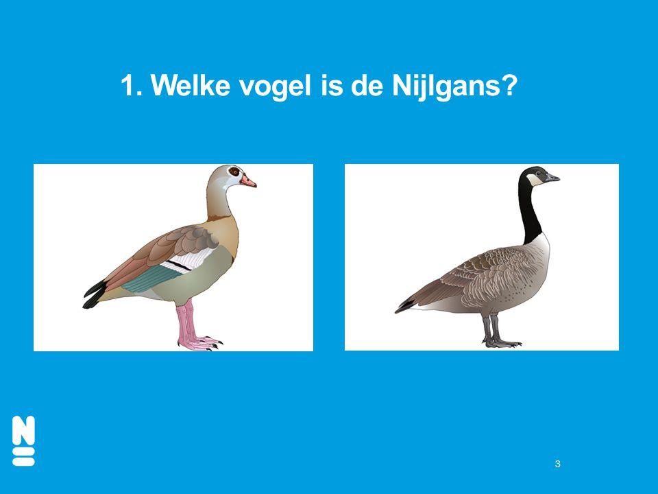 1. Welke vogel is de Nijlgans