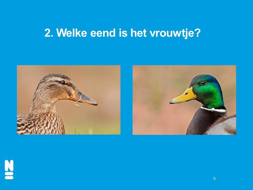 2. Welke eend is het vrouwtje